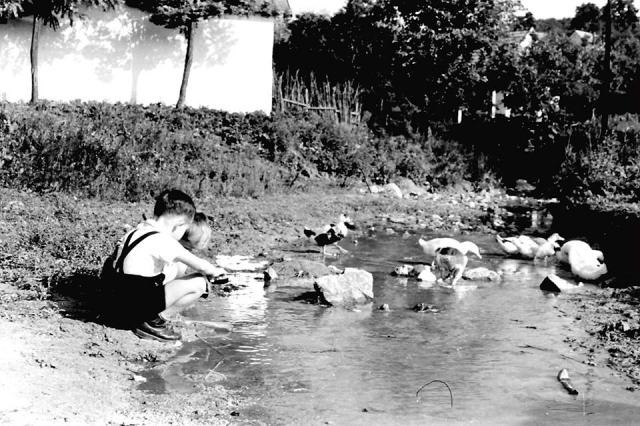 Játszó kisgyermekek a patakparton. Búcsú 1955. Nagykovácsi, Kolozsvár tér Kerekes Béla fotója