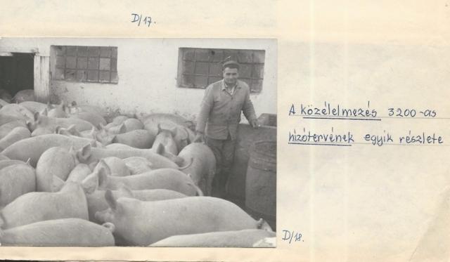A hízlalda Községi Krónika 1968.